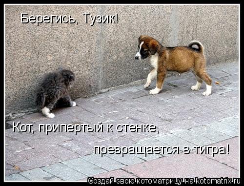 Котоматрица: Берегись, Тузик! Кот, припертый к стенке, превращается в тигра!