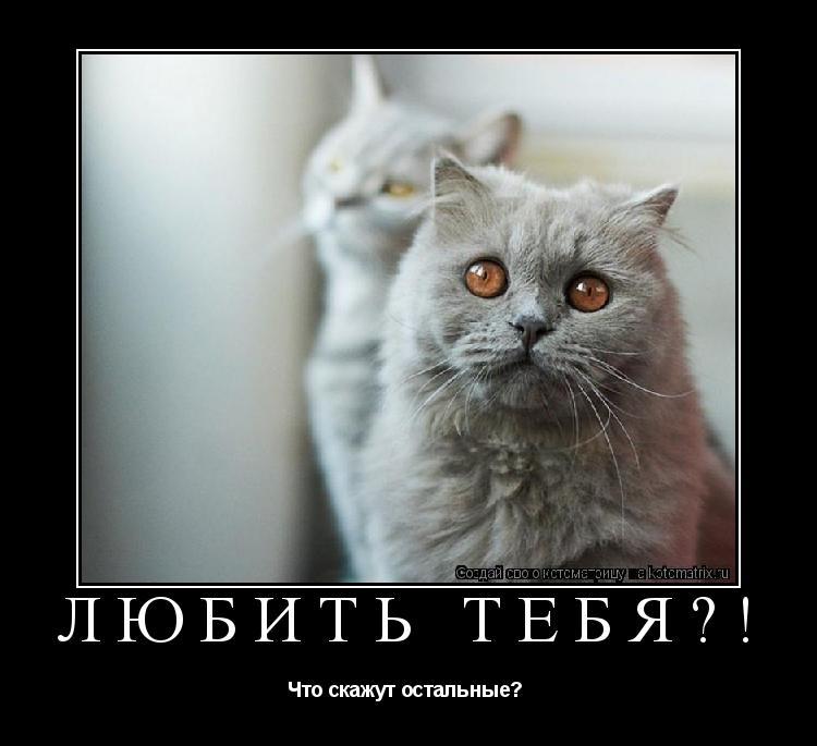 Котоматрица: Любить тебя?!  Что скажут остальные?