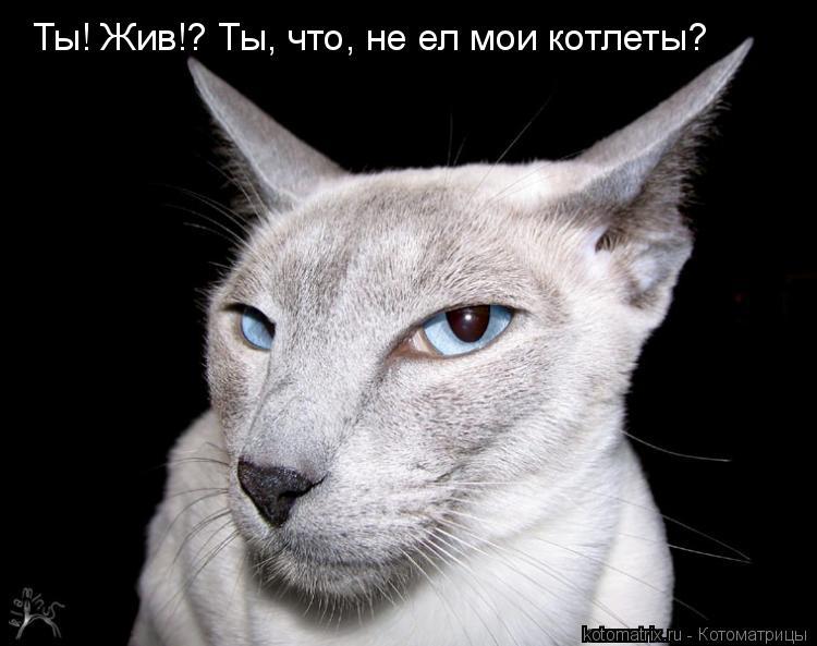 Котоматрица: Ты! Жив!? Ты, что, не ел мои котлеты?