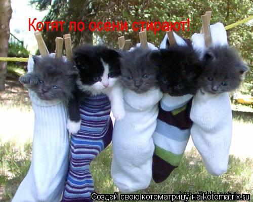 Котоматрица: Котят по осени стирают!