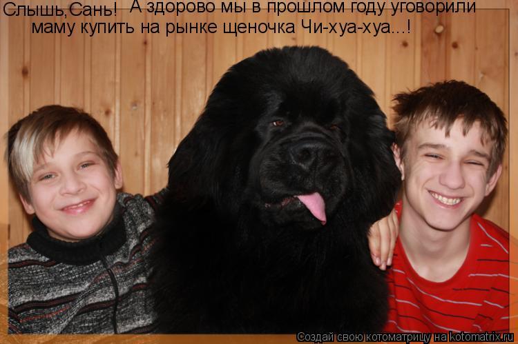 Котоматрица: Слышь,Сань! А здорово мы в прошлом году уговорили маму купить на рынке щеночка Чи-хуа-хуа...!