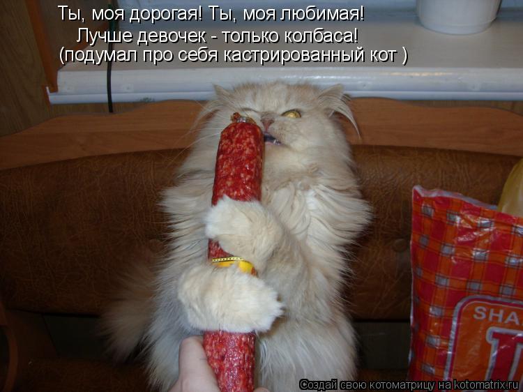 Котоматрица: Ты, моя дорогая! Ты, моя любимая! Лучше девочек - только колбаса!  (подумал про себя кастрированный кот )