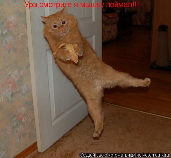 Котоматрица: Ура,смотрите я мышку поймал!!! Ура,смотрите я мышку поймал!!!