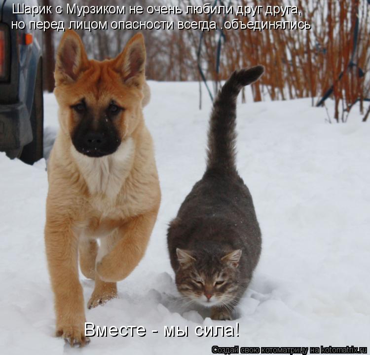 Котоматрица: Шарик с Мурзиком не очень любили друг друга, но перед лицом опасности всегда .объединялись Вместе - мы сила!