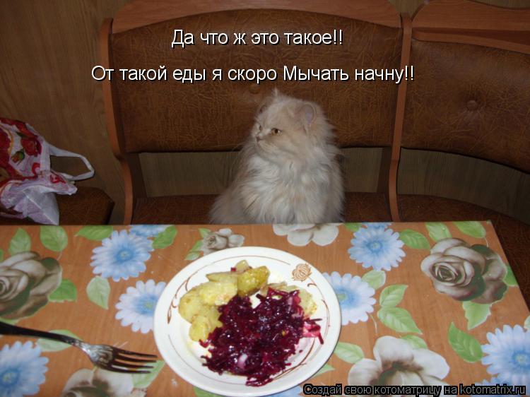 Котоматрица: Да что ж это такое!! От такой еды я скоро Мычать начну!!