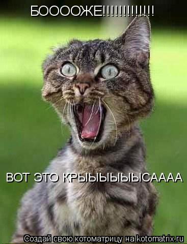 Котоматрица: БООООЖЕ!!!!!!!!!!!!! ВОТ ЭТО КРЫЫЫЫЫЫСАААА