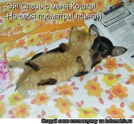 Котоматрица: -Эй! Слезь с меня Кошка! -На себя посматри! псина))