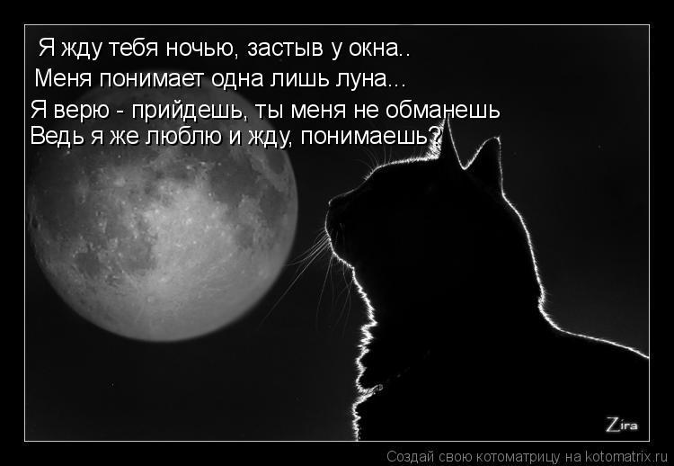 Котоматрица: Я жду тебя ночью, застыв у окна.. Меня понимает одна лишь луна... Я верю - прийдешь, ты меня не обманешь Ведь я же люблю и жду, понимаешь?
