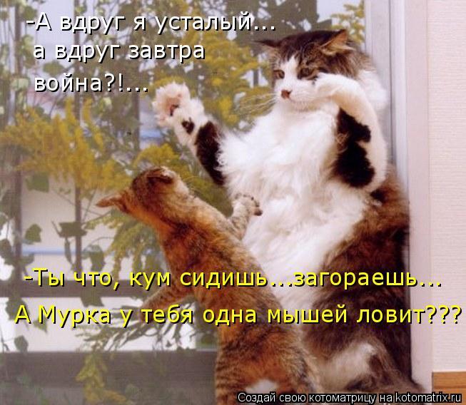 Котоматрица: -Ты что, кум сидишь...загораешь... А Мурка у тебя одна мышей ловит??? -А вдруг я усталый... а вдруг завтра война?!...