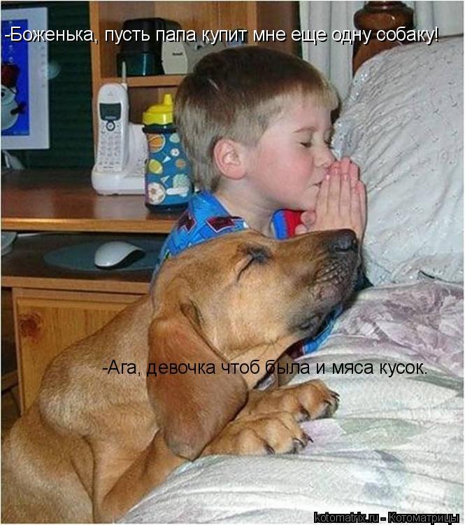 Котоматрица: -Боженька, пусть папа купит мне еще одну собаку! -Ага, девочка чтоб была и мяса кусок.