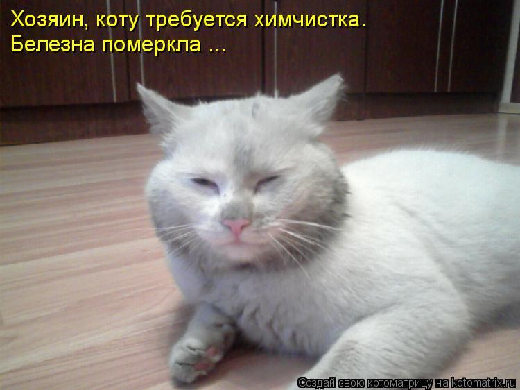 Котоматрица: Хозяин, коту требуется химчистка. Белезна померкла ...