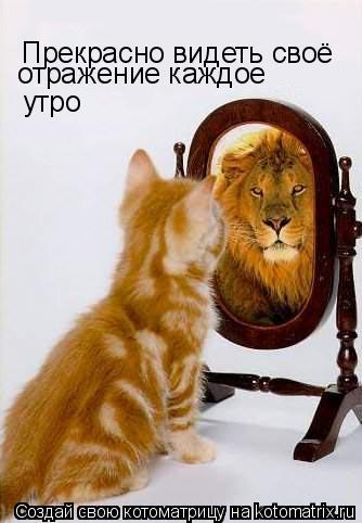 Котоматрица: Прекрасно видеть своё  отражение каждое  утро