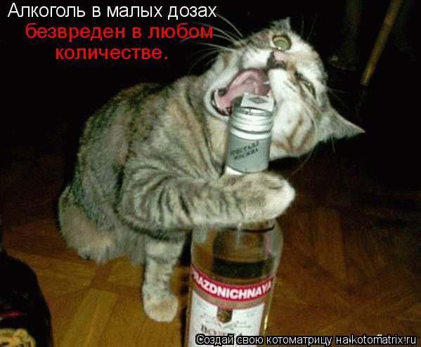 Котоматрица: Алкоголь в малых дозах   количестве. безвреден в любом