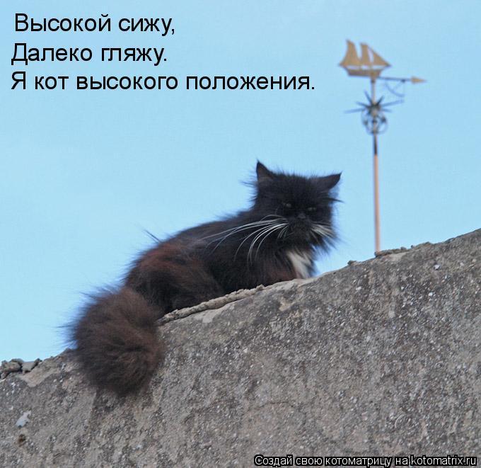 Котоматрица: Высокой сижу, Далеко гляжу. Я кот высокого положения.