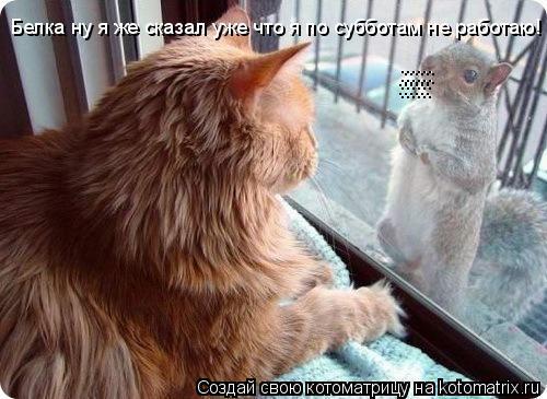 Котоматрица: Белка ну я же сказал уже что я по субботам не работаю! :::::: :::::: :::::: ::::::