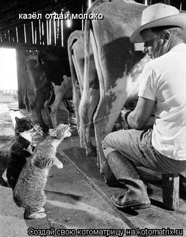 Котоматрица: казёл отдай молоко