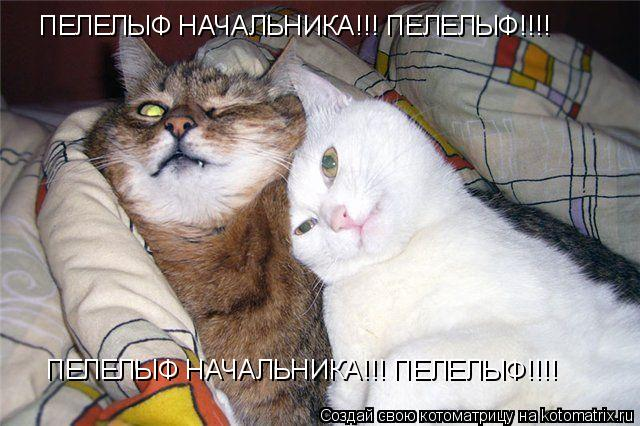 Котоматрица: ПЕЛЕЛЫФ НАЧАЛЬНИКА!!! ПЕЛЕЛЫФ!!!! ПЕЛЕЛЫФ НАЧАЛЬНИКА!!! ПЕЛЕЛЫФ!!!!