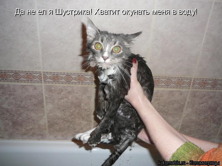 Котоматрица: Да не ел я Шустрика! Хватит окунать меня в воду!