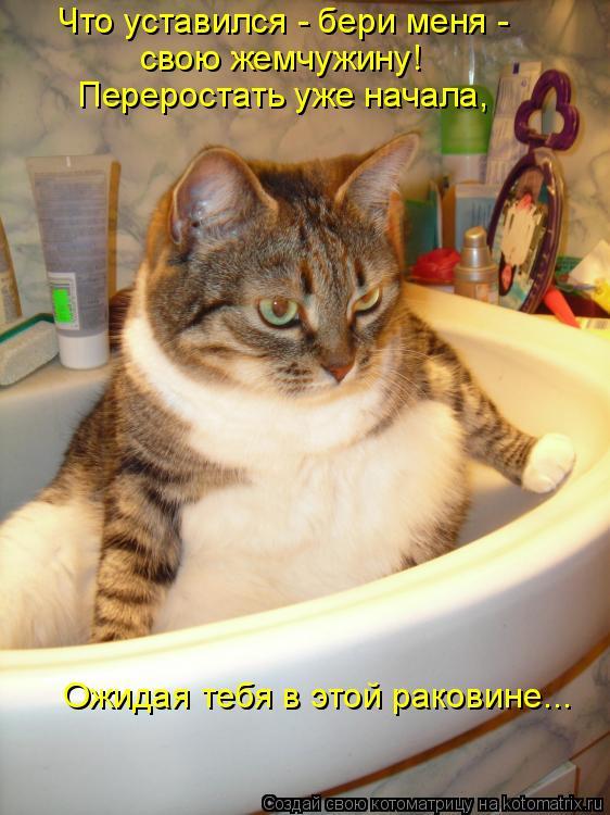 Котоматрица: Что уставился - бери меня -  свою жемчужину!  Переростать уже начала,  Ожидая тебя в этой раковине...