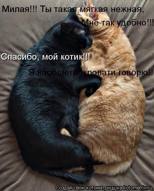Котоматрица: Милая!!! Ты такая мягкая нежная, Мне так удобно!!! Спасибо, мой котик!!! Я вообщето  кровати говорю!!!