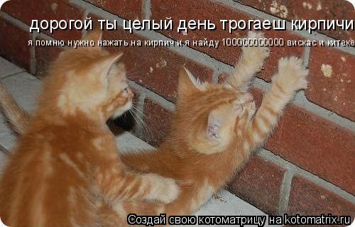 Котоматрица: дорогой ты целый день трогаеш кирпичи я помню нужно нажать на кирпич и я найду 100000000000 вискас и китекет