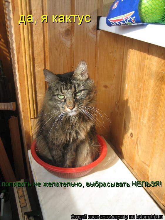 Котоматрица: да, я кактус поливать не желательно, выбрасывать НЕЛЬЗЯ! поливать не желательно, выбрасывать НЕЛЬЗЯ!