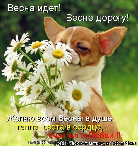Котоматрица: Весна идет!  Весне дорогу!  Желаю всем Весны в душе,  тепла, света в сердце,  счастья и Любви !!!