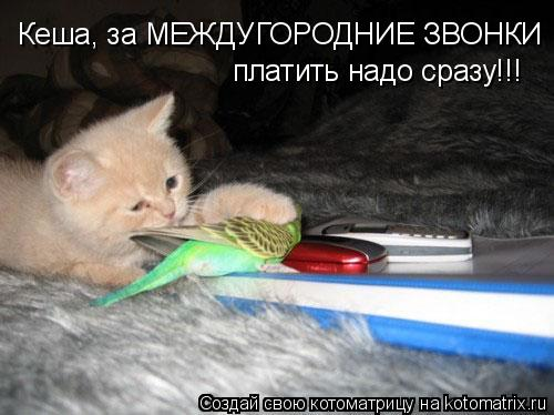 Котоматрица: Кеша, за МЕЖДУГОРОДНИЕ ЗВОНКИ  платить надо сразу!!!