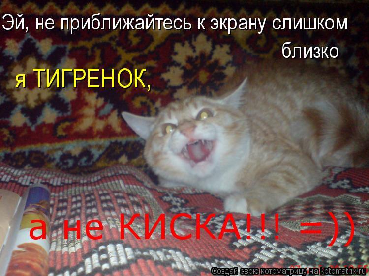 Котоматрица: Эй, не приближайтесь к экрану слишком  близко я ТИГРЕНОК, а не КИСКА!!! =))