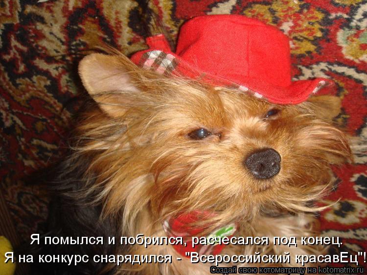 """Котоматрица: Я помылся и побрился, расчесался под конец. Я на конкурс снарядился - """"Всероссийский красавЕц""""!"""