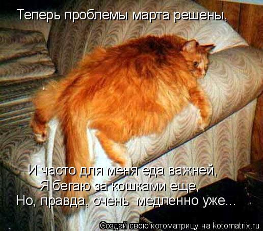 Котоматрица: Теперь проблемы марта решены,  И часто для меня еда важней,  Я бегаю за кошками еще,  Но, правда, очень  медленно уже...
