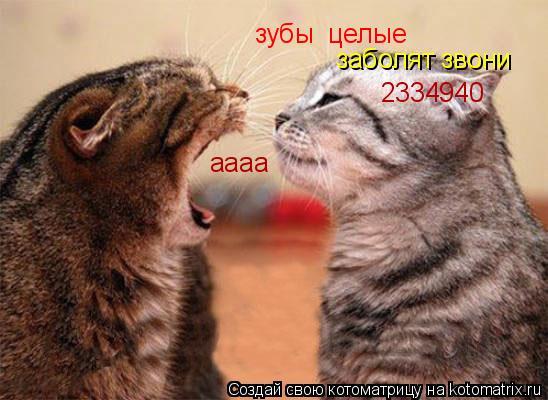 Котоматрица: зубы  целые заболят звони 2334940 аааа