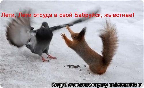 Котоматрица: Лети, Лети отсуда в свой Бабруйск, жывотнае!