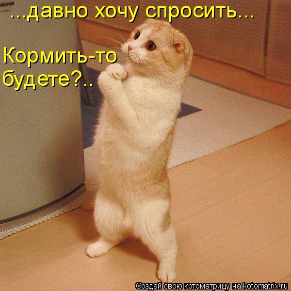 Котоматрица: ...давно хочу спросить... Кормить-то будете?..