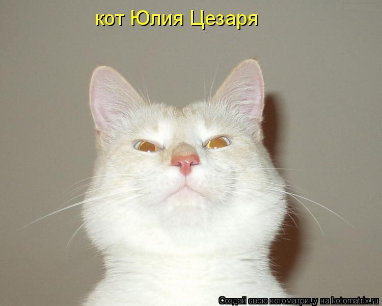 Котоматрица: кот Юлия Цезаря