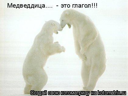 Котоматрица: Медведдица....  - это глагол!!!