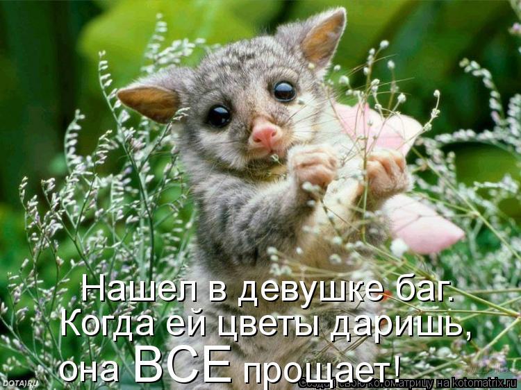 Котоматрица: Нашел в девушке баг. Когда ей цветы даришь,  она  BCE прощает!
