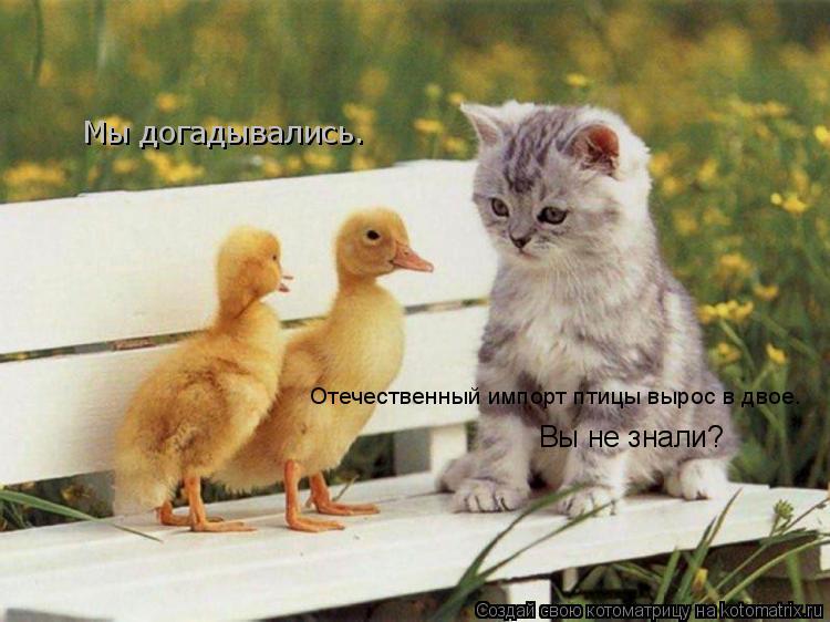 Котоматрица: Отечественный импорт птицу вырос в двое. вы не знали? Отечественный импорт птицы вырос в двое.  Вы не знали? Мы догадывались.