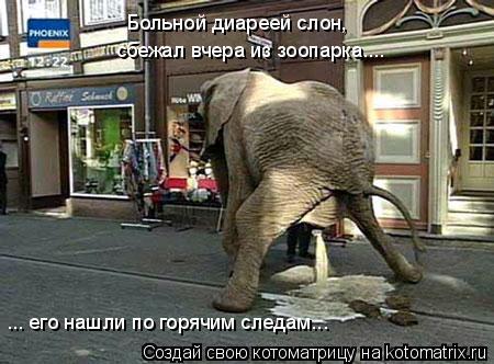 Котоматрица: Больной диареей слон, сбежал вчера из зоопарка.... ... его нашли по горячим следам...