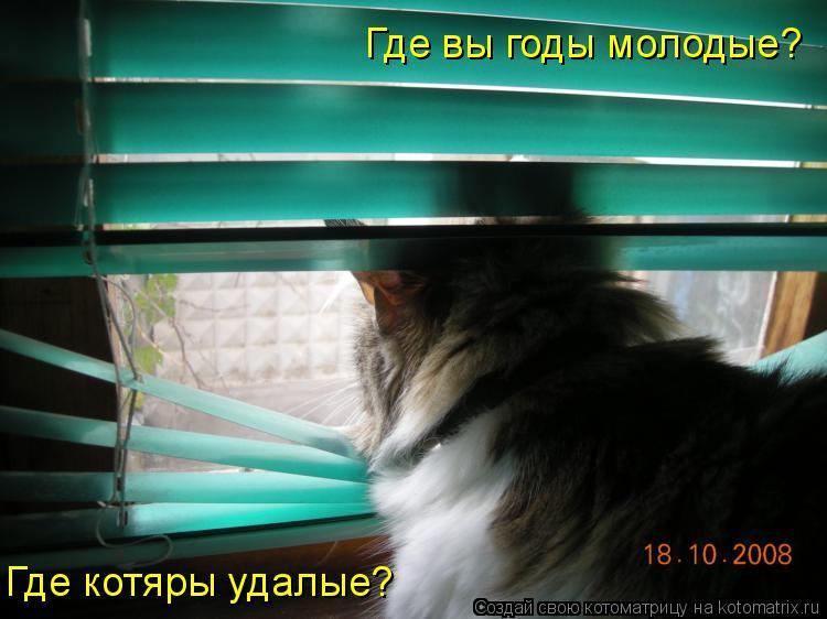 Котоматрица: Где котяры удалые? Где вы годы молодые?