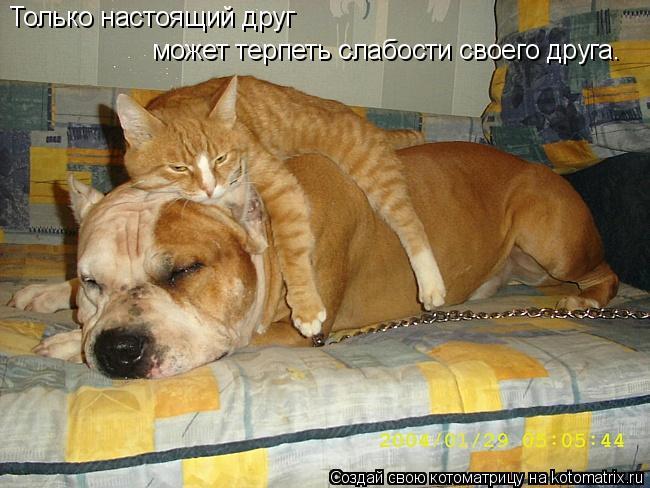 Котоматрица: Только настоящий друг  может терпеть слабости своего друга.
