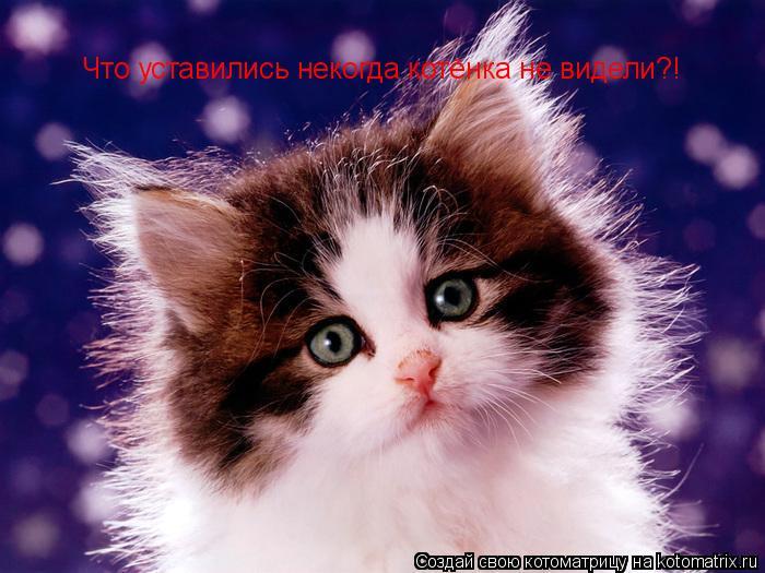 Котоматрица: Что уставились некогда котёнка не видели?!