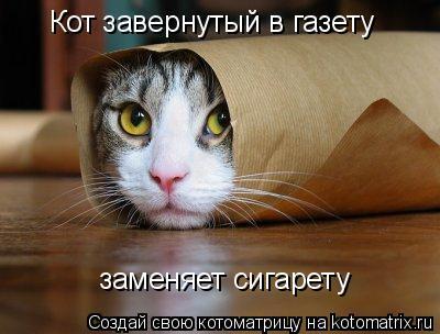 Котоматрица: Кот завернутый в газету заменяет сигарету