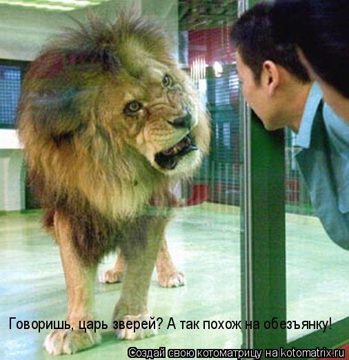 Котоматрица: Говоришь, царь зверей? А так похож на обезъянку!