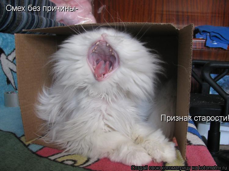 Котоматрица: Смех без причины- Признак старости!