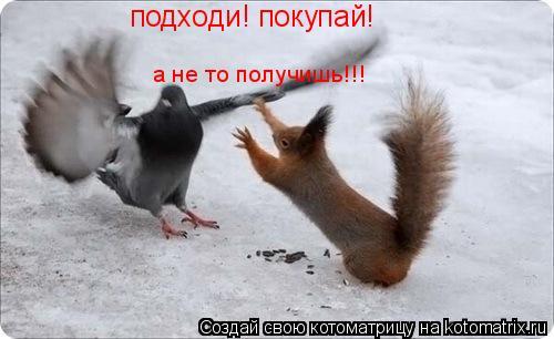 Котоматрица: подходи! покупай! а не то получишь!!!