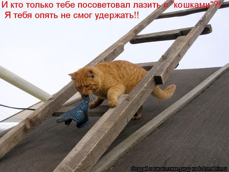 """Котоматрица: И кто только тебе посоветовал лазить с """"кошками""""?! Я тебя опять не смог удержать!!"""