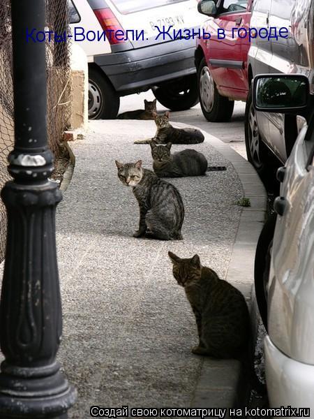 Котоматрица: Коты-Воители. Жизнь в городе