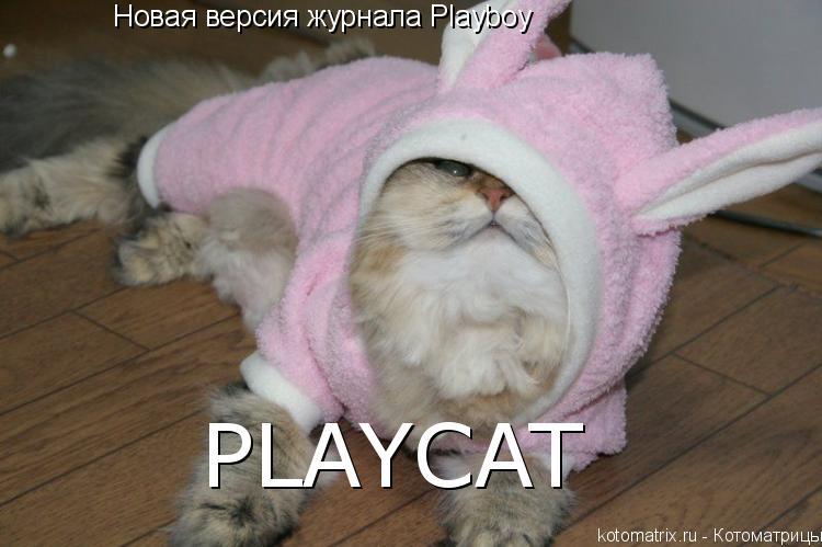 Котоматрица: Новая версия журнала Playboy PLAYCAT