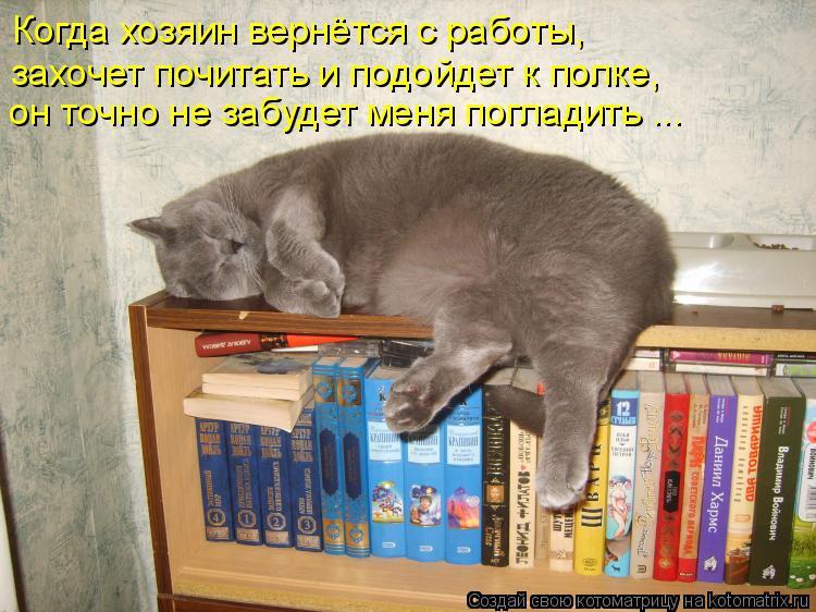 Котоматрица: Когда хозяин вернётся с работы,  захочет почитать и подойдет к полке, он точно не забудет меня погладить ...
